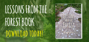 Lessons from the Forest Book Download