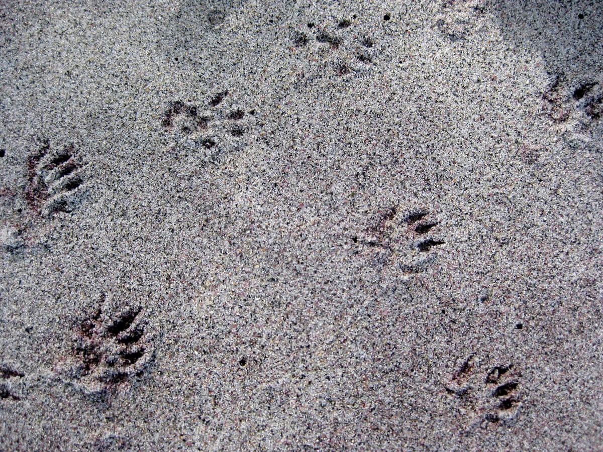 Animal Tracks | The Forest Fairy