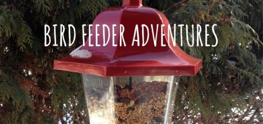 Bird Feeder Adventures in Winter