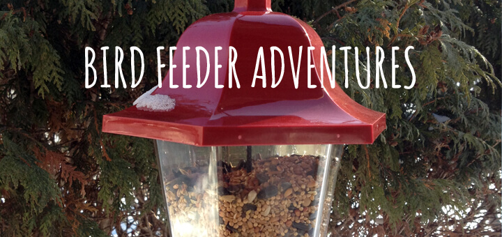 Bird Feeder Adventures in Winter