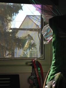 Sparrow in my window