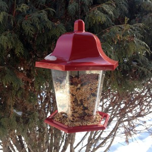 My little red bird feeder