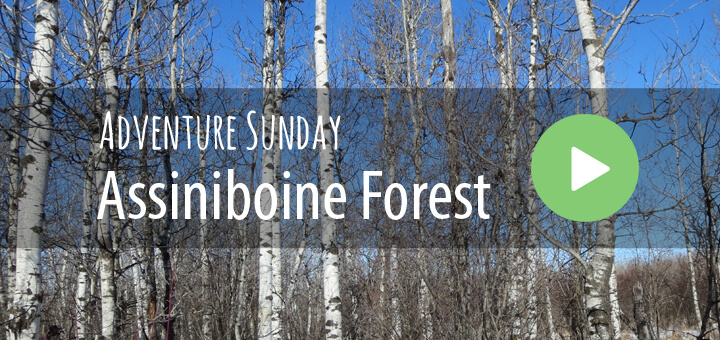 Adventure Sunday in the Assiniboine Forest