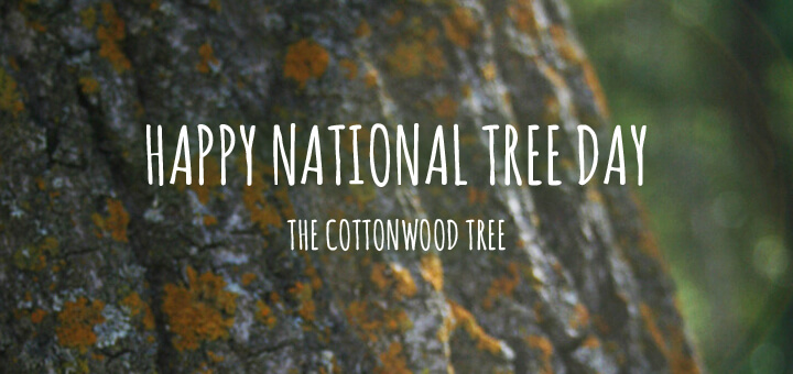 Happy National Tree Day September 23, 2015 – Celebrating the Cottonwood