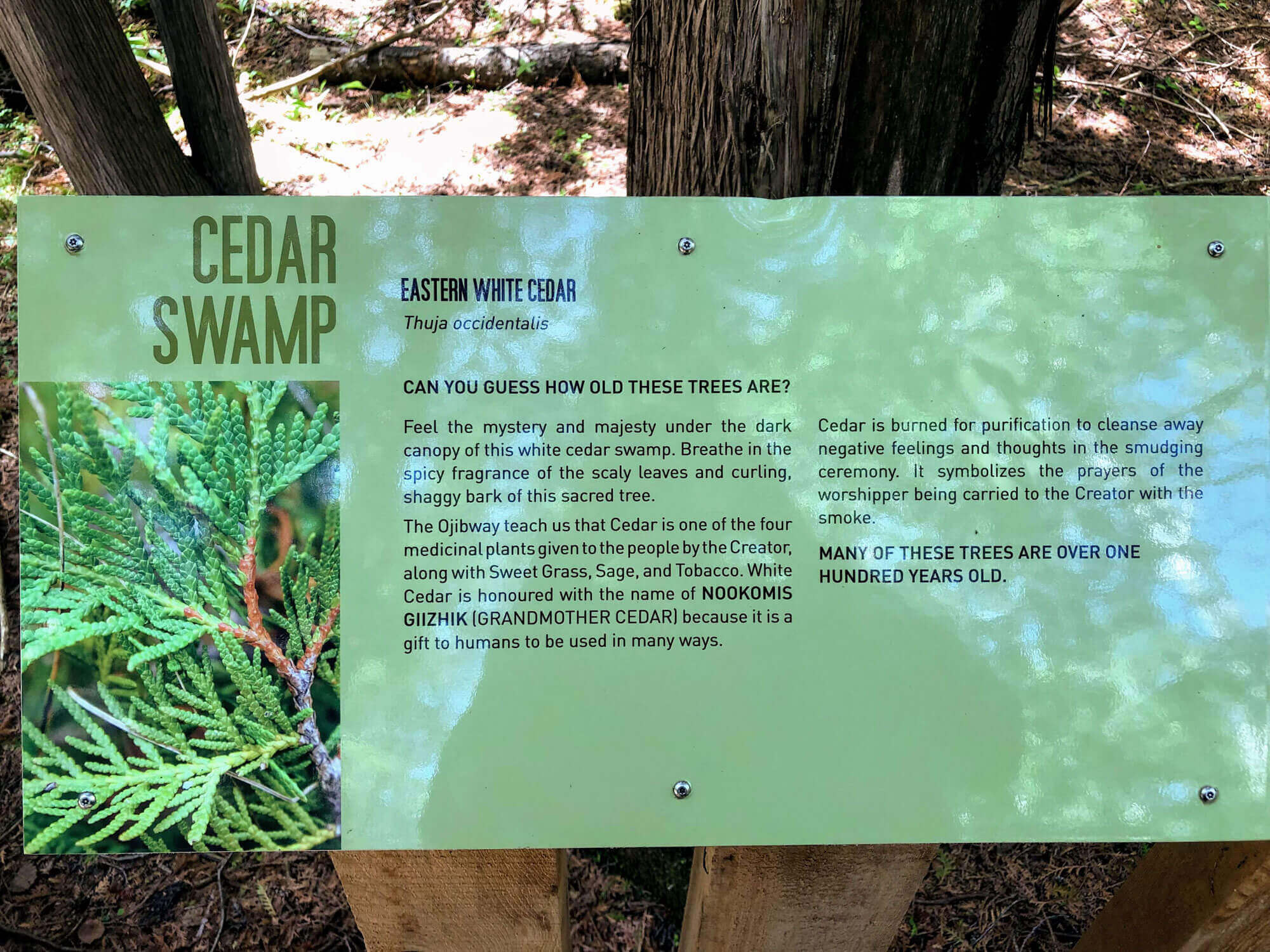 Cedar Swamp Interpretive Signage